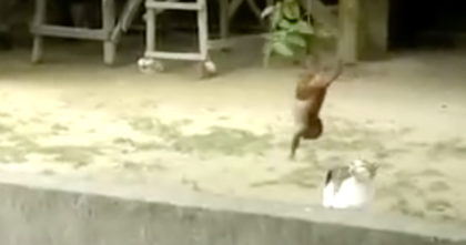 Cat noticed a monkey swiniging in the tree, but his next move left me speechless