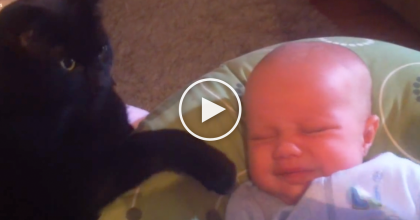 Their Baby Started Crying, But Then Their Cat Did Something I'll NEVER Forget!  This Is Unbelievable…