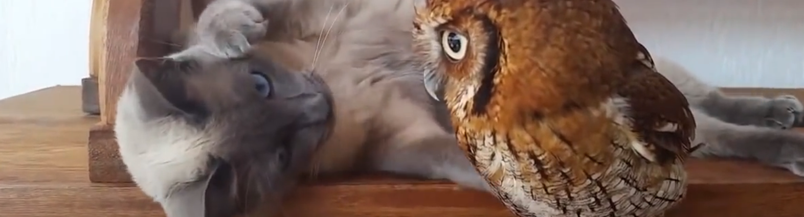 cat-and-owl-best-friends