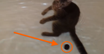 Most Cats HATE This, But You Gotta See What Happens When They Put Their Cat In The Bath!