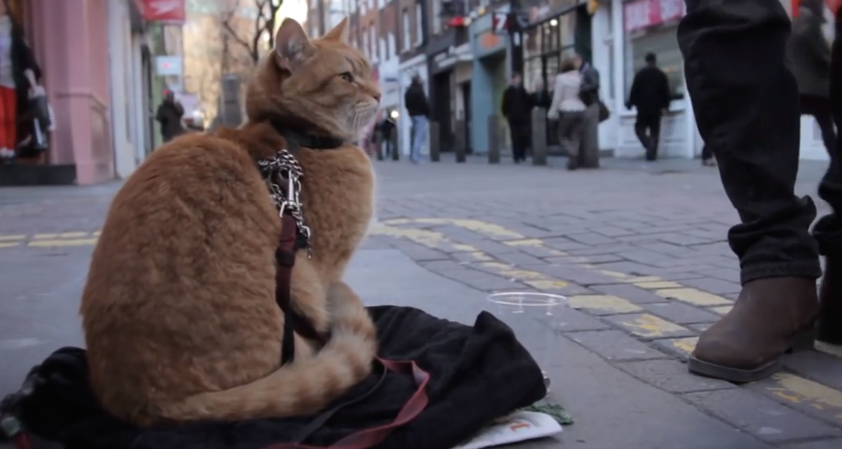 cat-sitting-on-street-with-mussician