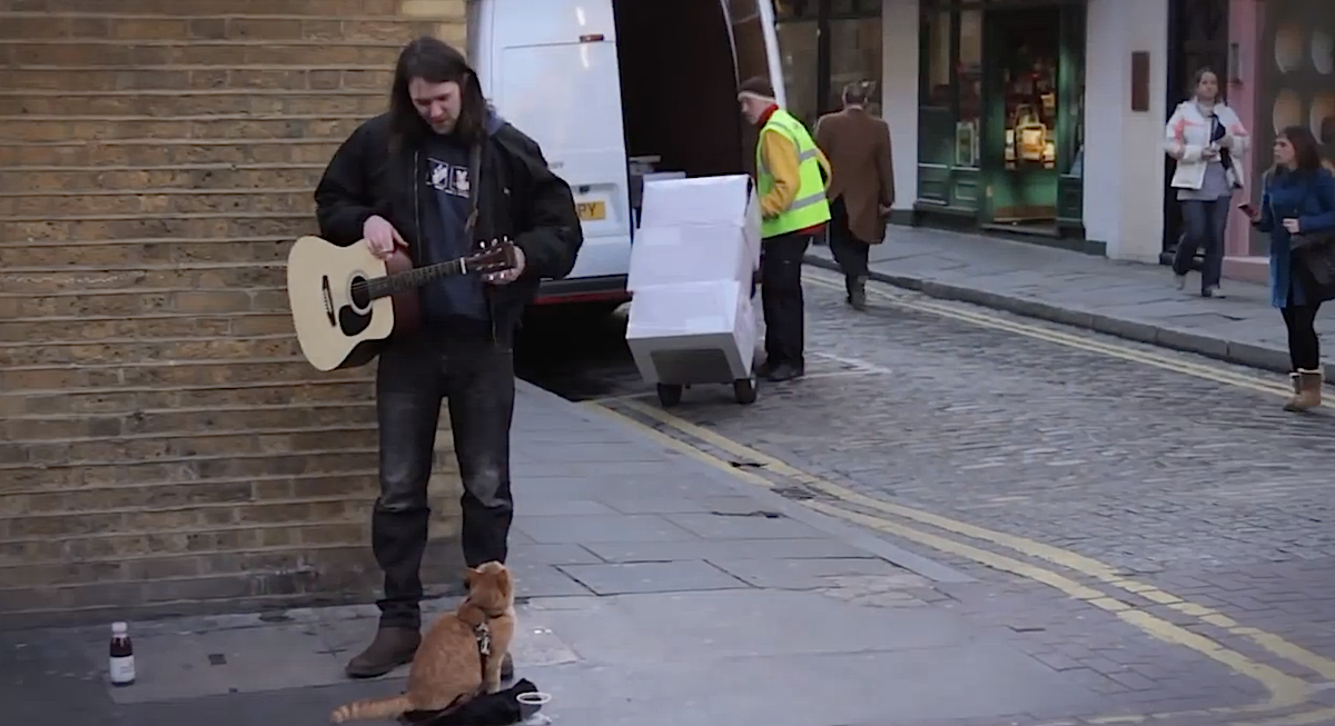 cat-with-street-musician