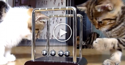 These Kittens Were VERY Interested In Something, So They Grabbed The Camera! ADORABLE… Watch!