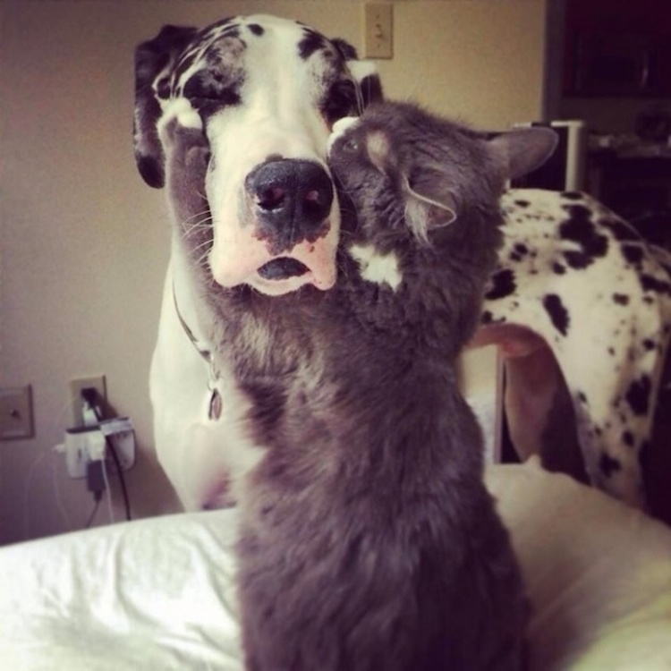 Cat Love Love is Real Cats And Dogs 10