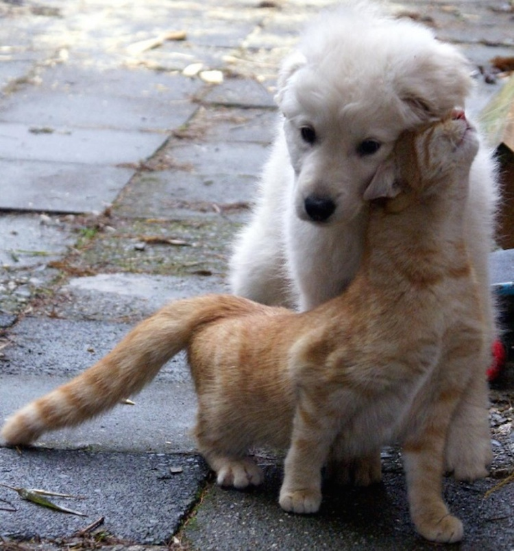 love-is-real-cats-and-dogs-14