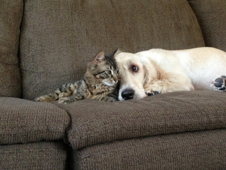 love-is-real-cats-and-dogs-15