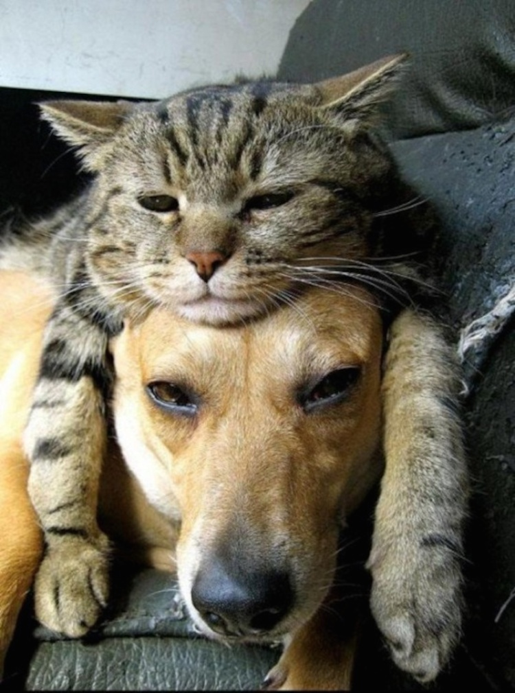 love-is-real-cats-and-dogs-16