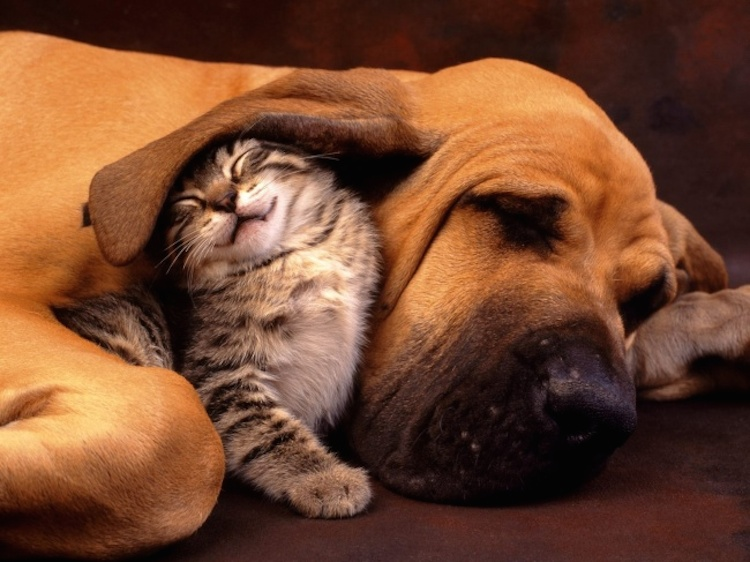 love-is-real-cats-and-dogs-17