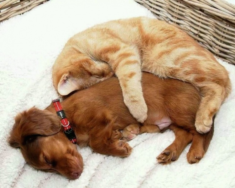 love-is-real-cats-and-dogs-18