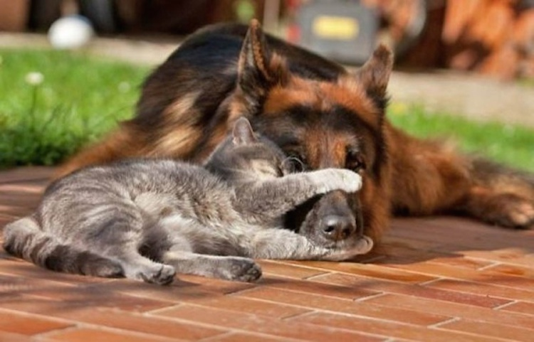 love-is-real-cats-and-dogs-23