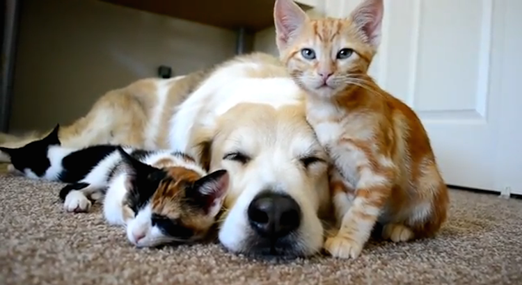 love-is-real-cats-and-dogs-3