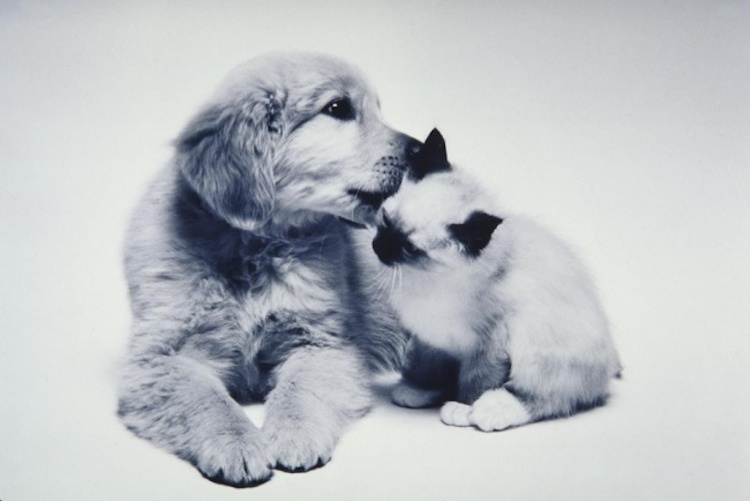 love-is-real-cats-and-dogs-5
