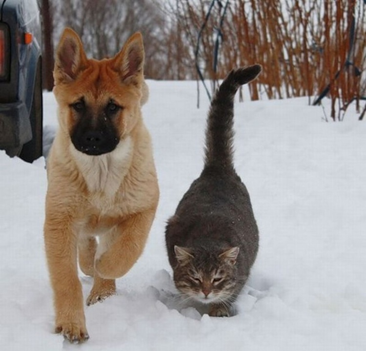 love-is-real-cats-and-dogs-7