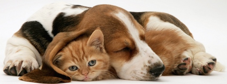 i Love You Cat Pictures Love is Real Cats And Dogs 8