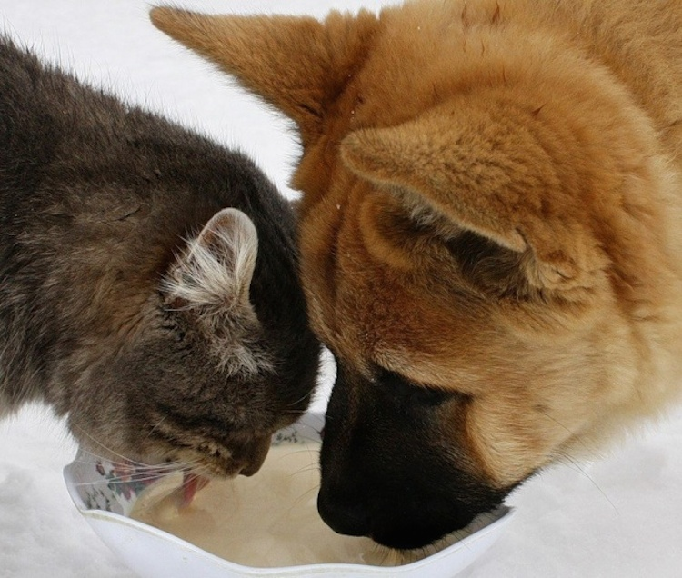 love-is-real-cats-and-dogs-9