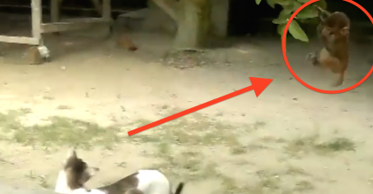 They Saw A Monkey Swinging From The Tree, But When They Zoomed In, I Couldn't Believe My Eyes!