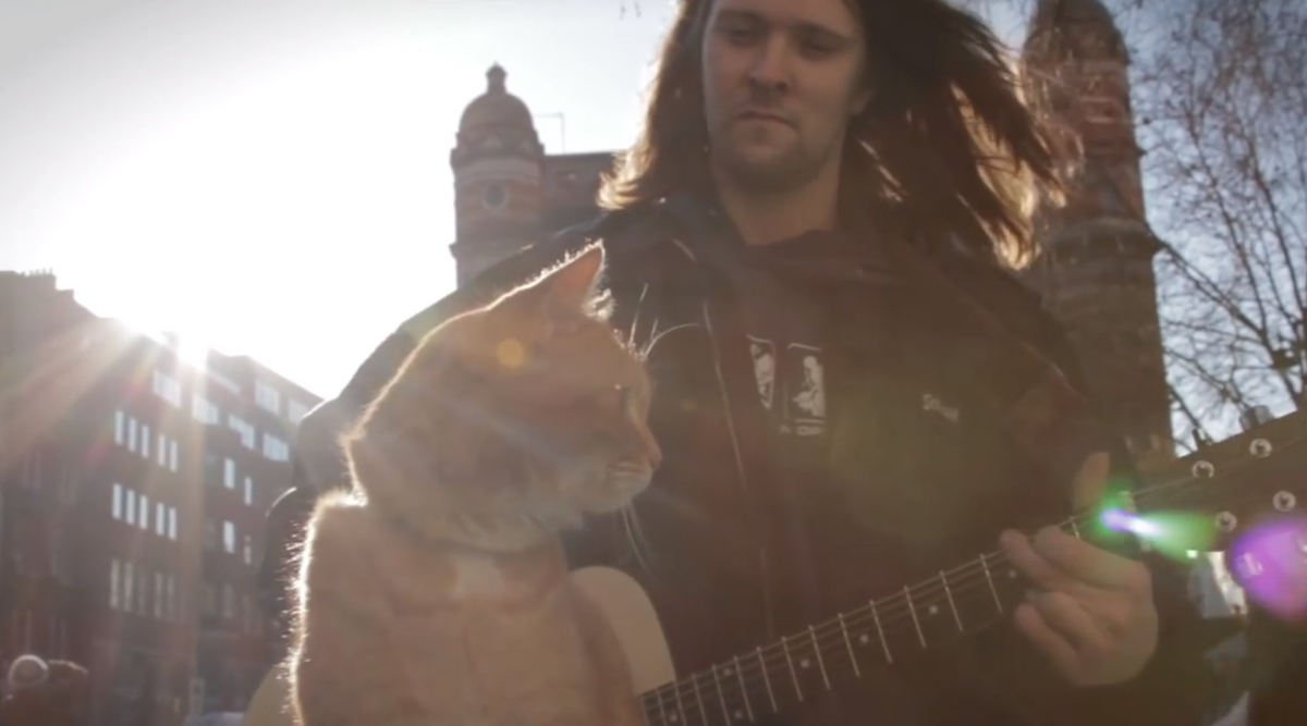 playing-guitar-with-cat