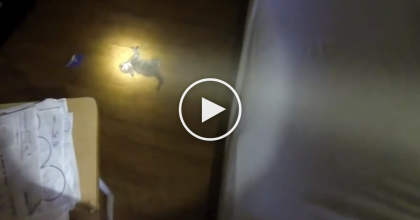They Found A Surprisingly Small Animal On The Ground, But Watch What Happens Next! Amazing…