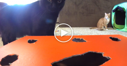 They Built This Game For Their Cats And Set Them Loose… You Gotta See Them In Action! WATCH