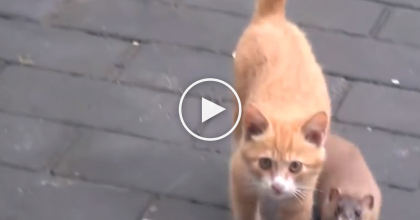 They Saw A Small Animal Playing With Their Kitten, But Then They Took A Closer Look… Unbelievable!!