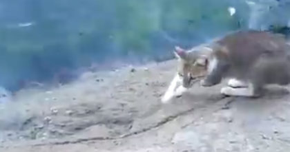 Homeless street cat was hungry, but then sees something in the water… Just WATCH his next move!