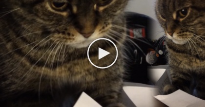 She Heard A Weird Sound, So She Took A Closer Look… WATCH What She Caught On Camera!