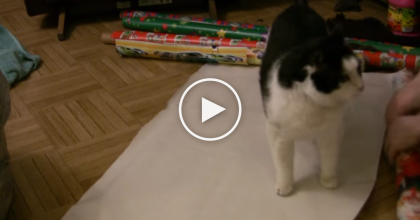 He Was In The Middle Of Wrapping Gifts, But Then He Spotted The Best Present Ever… WATCH THIS!