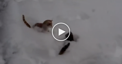 They Decided To Let The Cats Out To Play In The Snow, But They Were In For A Surprise… Watch This!