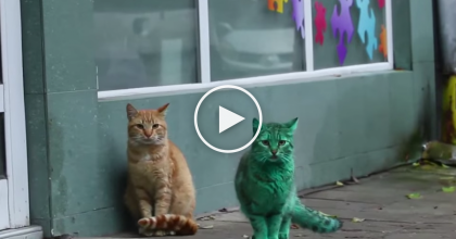 People Noticed A Turquoise Cat, But They Didn't Understand WHY Until Now! UNBELIEVABLE…