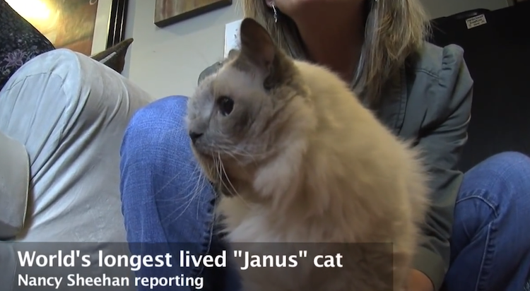 janus-cat-double-kitten-cat