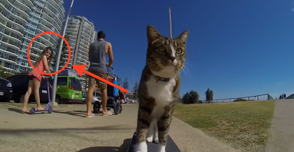 She Noticed This Cat, But NEVER Expected It Could EVER Do THIS!  This Cat Is Truly Incredible…