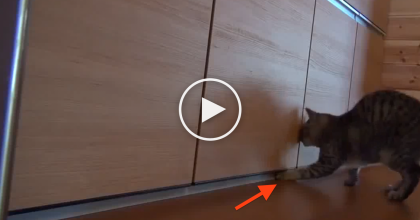 He Couldn't Open The Door, So He Got His Friends Help, But Just LOOK At His Face Now… HILARIOUS!