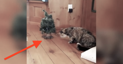 This Cat Spots A Christmas Tree And Goes Over To Check It Out, But NEVER Expected This! Hilarious…