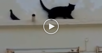Cat Thinks He's Pretty Smart, But Wait Till You See What The Bird Does, Just Watch! It's Hilarious…