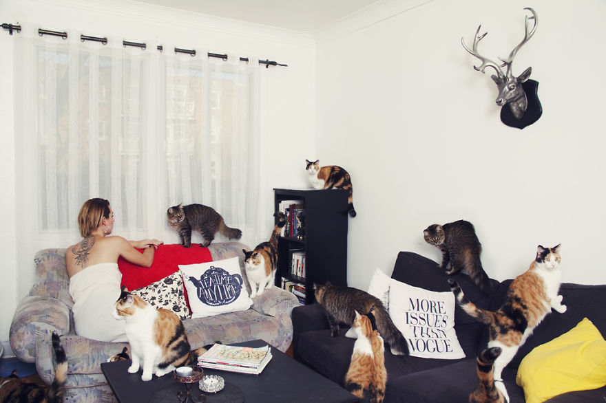 She Noticed Cats Running Everywhere, So She Started Taking Pictures... The Result? Amazing11