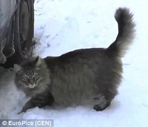 cat-saves-freezing-baby