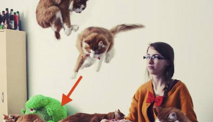 She Noticed Cats Running Everywhere, So She Started Taking Pictures… The Result? Amazing!