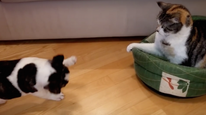 Dog trying to take a nap, but when he goes to find his bed… Now watch what the cat does, HILARIOUS.