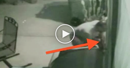 They Noticed Something Stuck In The Doggie Door, But When They Took A Second Look… OMG!!