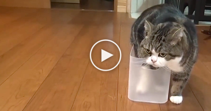 He Found The Most Uncomfortable Place, But That DOESN'T Matter! He Never Gives Up…