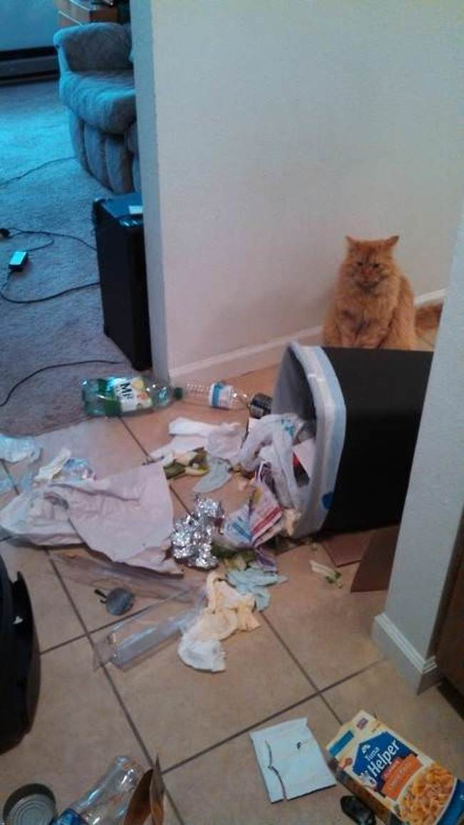 photos-that-prove-cats-are-a-struggle-13