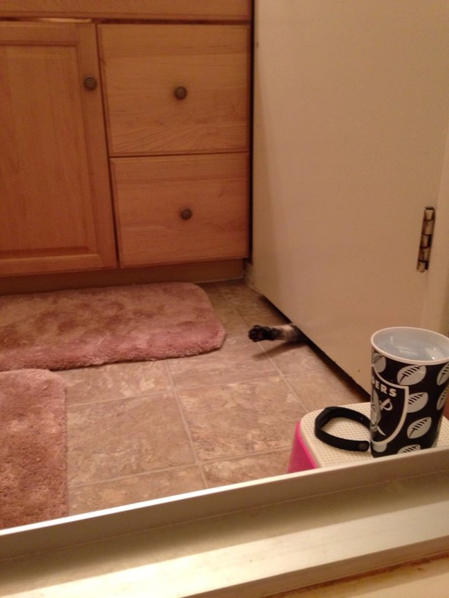 photos-that-prove-cats-are-a-struggle-14
