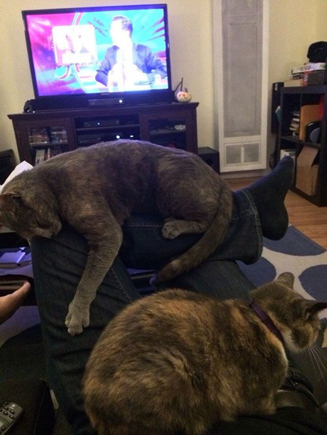 photos-that-prove-cats-are-a-struggle-24
