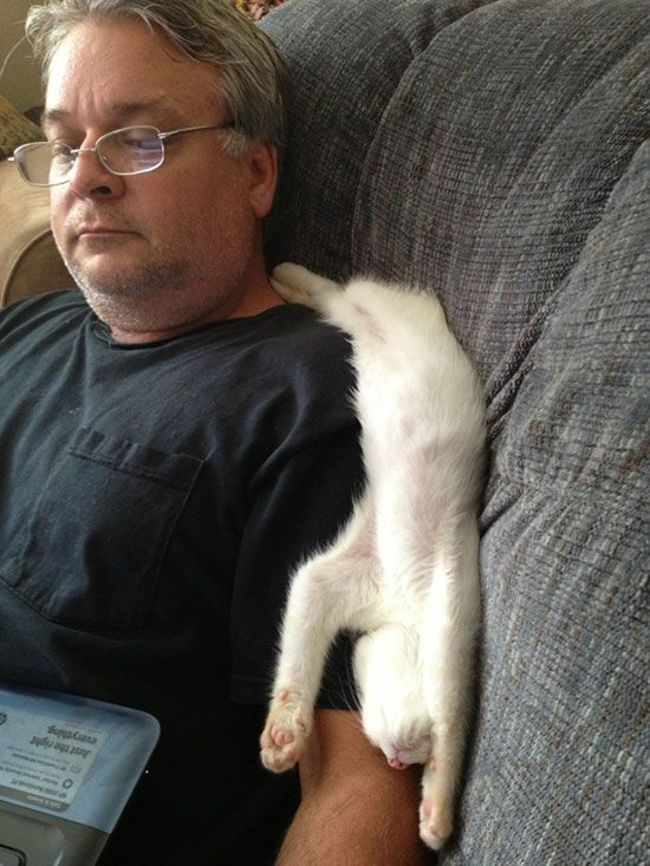 photos-that-prove-cats-are-a-struggle-27