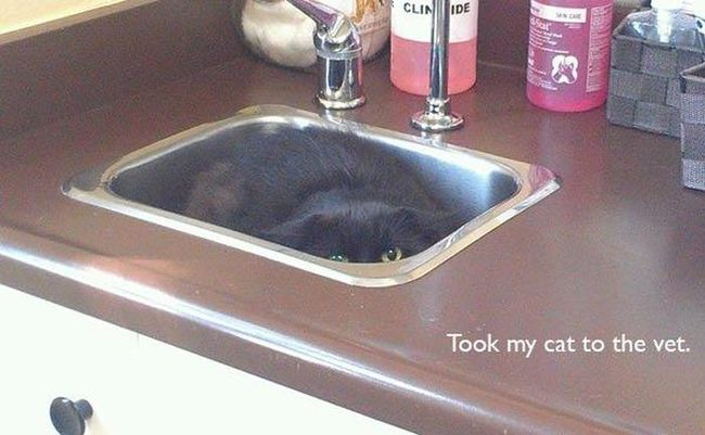 photos-that-prove-cats-are-a-struggle-28
