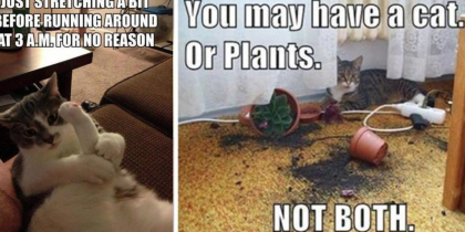 35 Things Only Cat Owners Will Understand. 'The Struggle Is Real' But #4 Is Hilarious! LOL