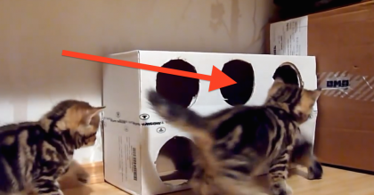 They Took A Box And Cut 6 Holes In It For Their Kittens… *It's Pure Adorableness!* MUST WATCH