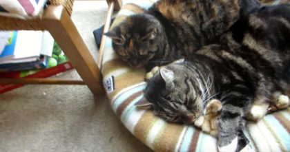 They Noticed Their Two Cats Sleeping With Some New Friends, So They Started Recording…