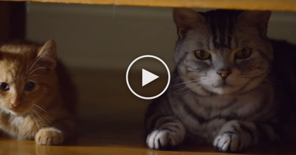 They're Watching 'The Big Game' But This Cat Has Something To Say About It… Hilarious!