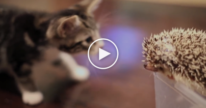 Kitten Discovers A New Animal For The First Time, But His Reaction Is Purr-fectly ADORABLE…